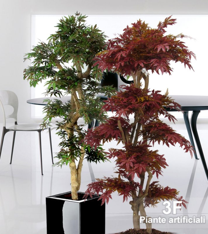 acero japan altezza cm 185 vaso cm 30 3f piante