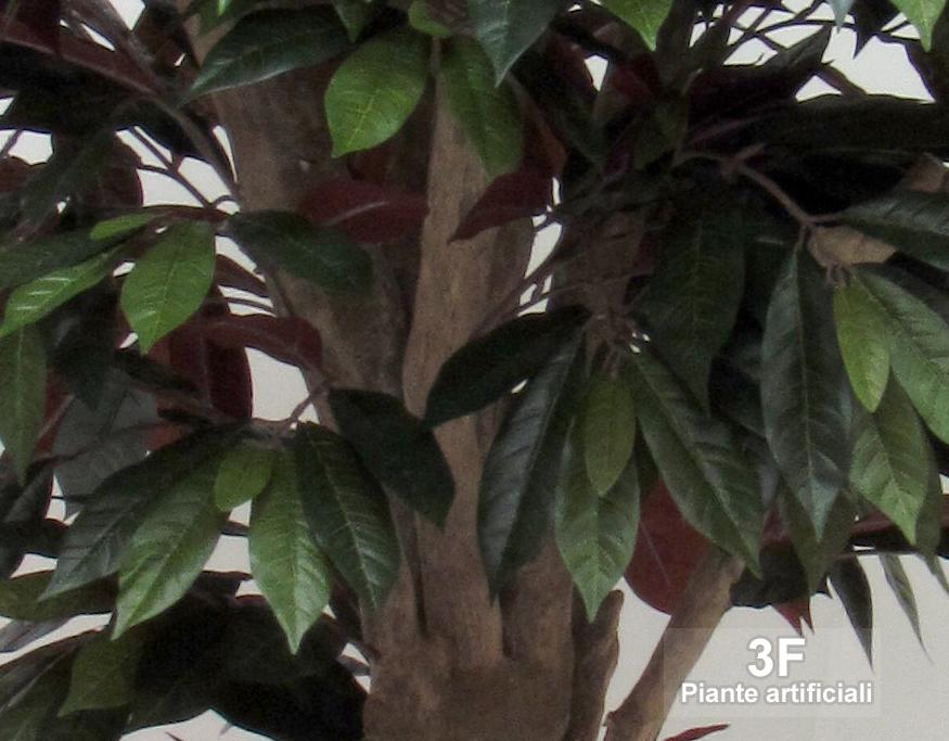 Capensia mediterraneo altezza cm 180 vaso cm 26 3f for Piante artificiali