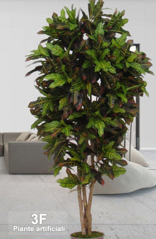 Piante Alto Fusto : Croton luxe alto fusto altezza cm Ø vaso