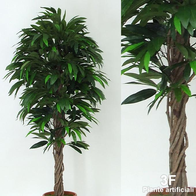 Mango liana altezza cm 150 vaso cm 22 3f piante for Piante artificiali economiche