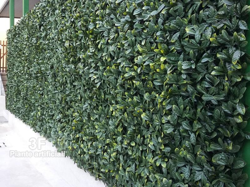 Siepe pitosforo cm 50 x 50 uvr cm 50 x 50 3f piante for Amazon siepe finta