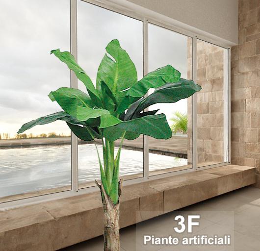 Pianta Di Banano Da Interno Prezzo - The Homey Design