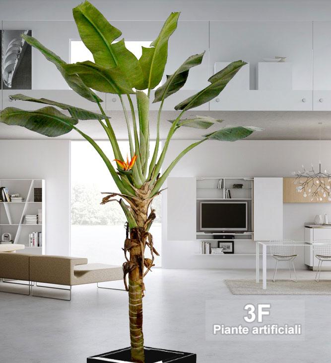 Banano paradise palma altezza cm 260 vaso cm 30 - Costo palma da giardino ...