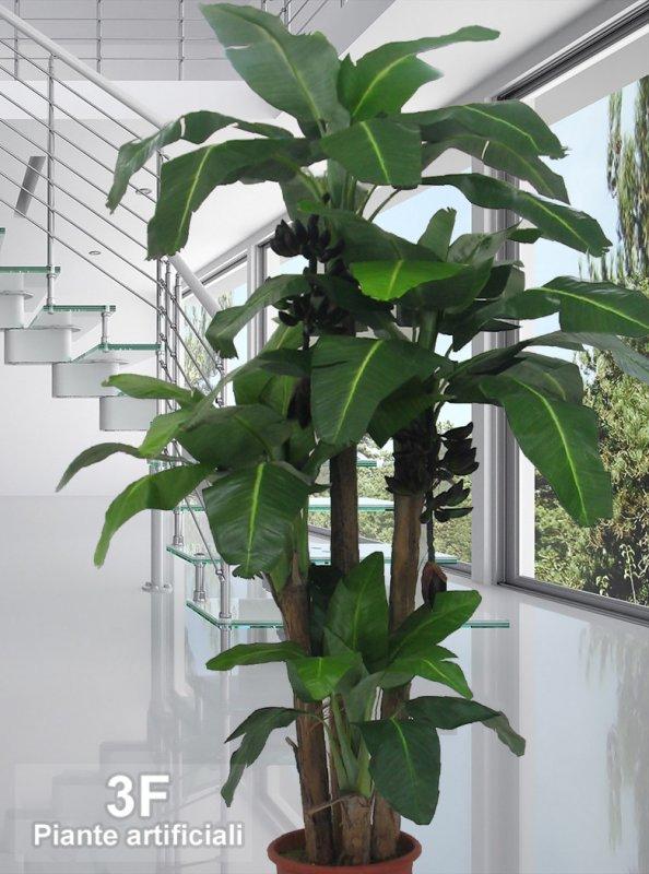 Banano extra large x 4 altezza cm 80 150 230 270 - Pianta banano ...