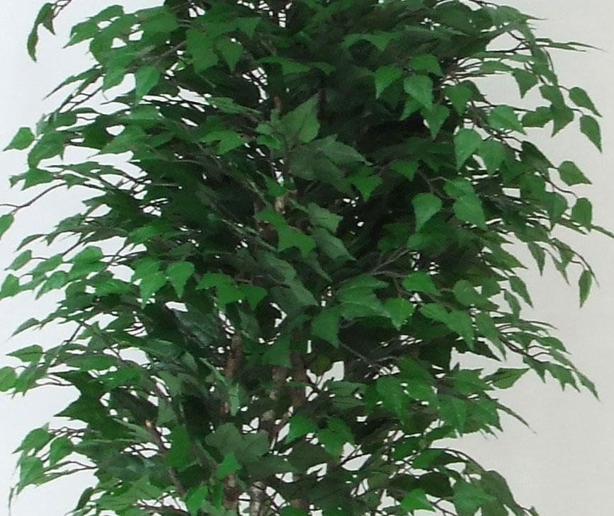 Betulla medium 42 altezza cm 175 vaso cm 24 3f for Piante artificiali