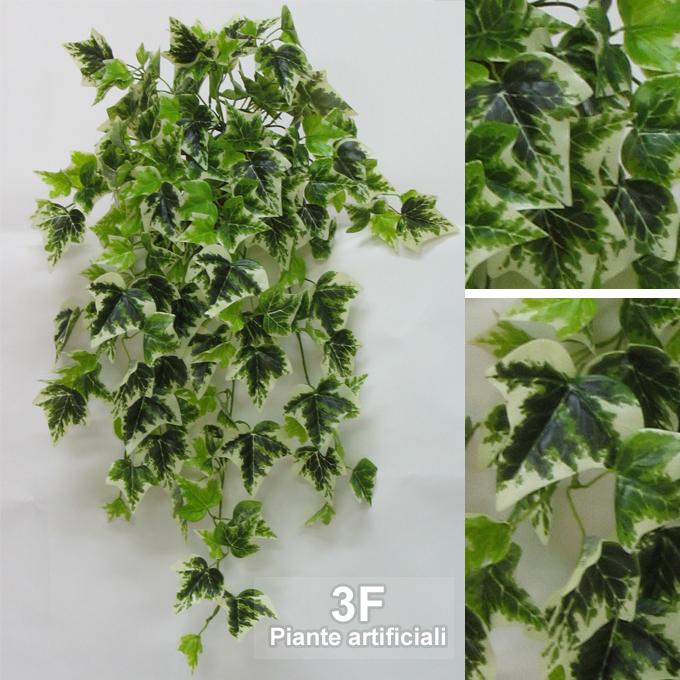 Edera variegata cadente cm 90 180 foglie 3f piante - Edera da interno ...