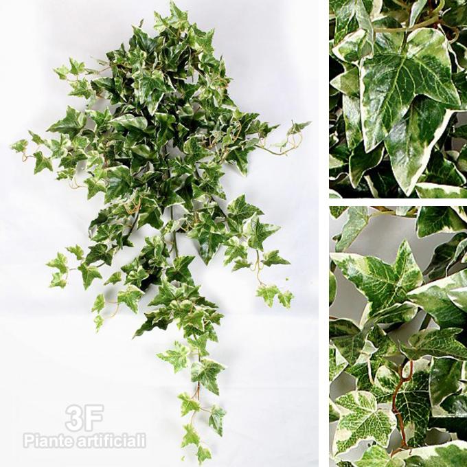 Edera variegata luxe cadente cm 110 204 foglie - Edera da interno ...