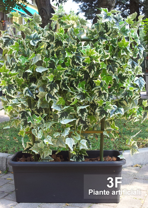 Siepe edera 3d altezza cm 130 larghezza cm 100 for Siepe in vaso