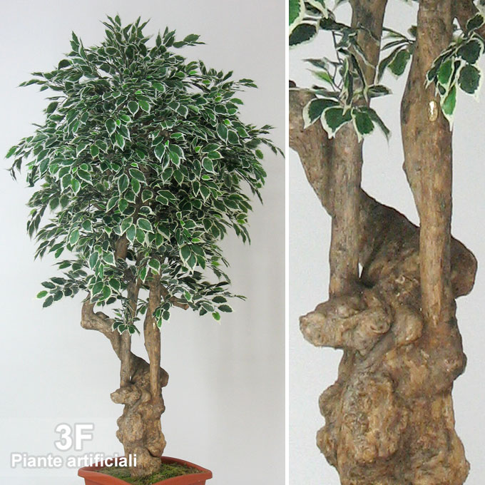 Ficus benjamin jamaica ramified trunk altezza cm 200 for Piante artificiali milano
