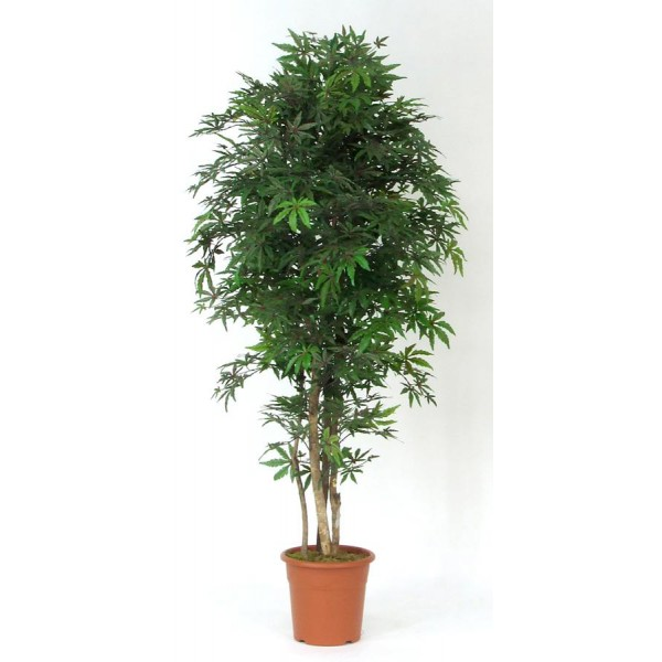 Acero 54 cm 200 3f piante artificiali for Piante d arredo per interni