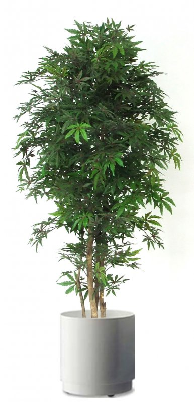 Acero 54 cm 175 vaso cm 24 3f piante artificiali for Vasi in terracotta economici