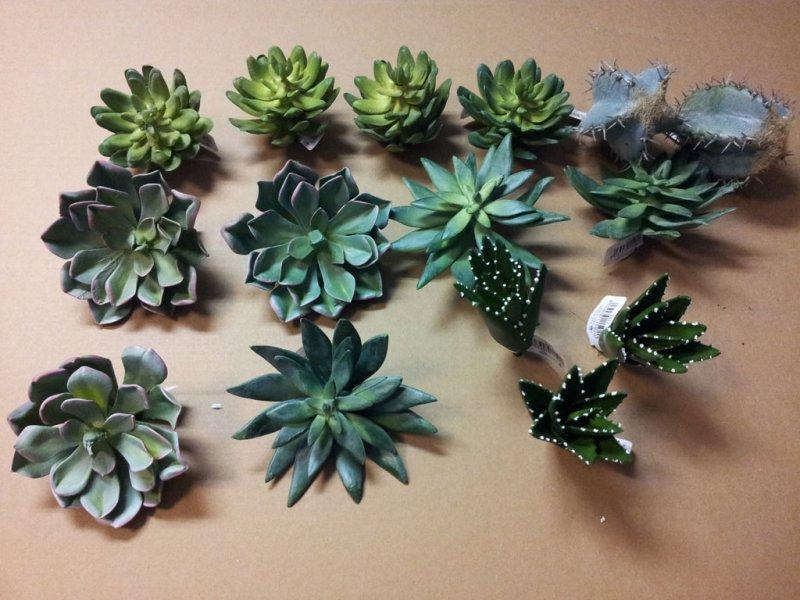 piante grasse finte vendita online