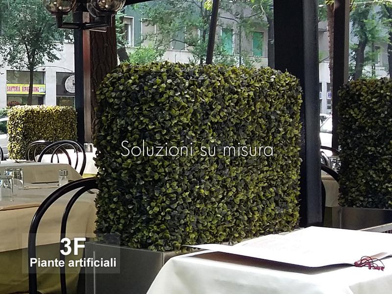 Bosso siepe boxwood uvr cm 100 x 34 x h 100 misure for Bosso siepe