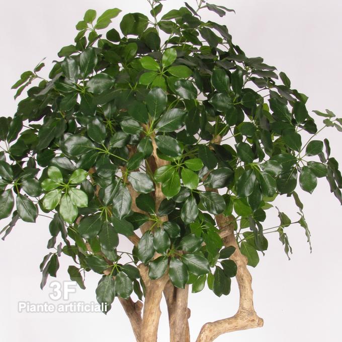 Schefflera mediterraneo trunk altezza cm 175 3f for Piante artificiali