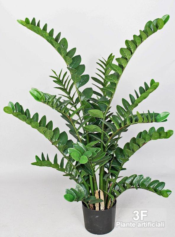 Zamioculcas altezza cm 130 vaso cm 20 3f piante for Zamioculcas cura