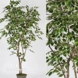 FICUS LUXE NEW GARDEN VARIEGATED-PIANTE FINTE FICUS ARTIFICIALE